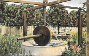 Olive-Mill-Postcard